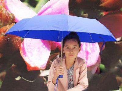 Paraguas e Impermeables - Artículos Promocionales